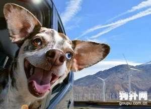 狗狗晕车怎么办,解决狗狗晕车的方法